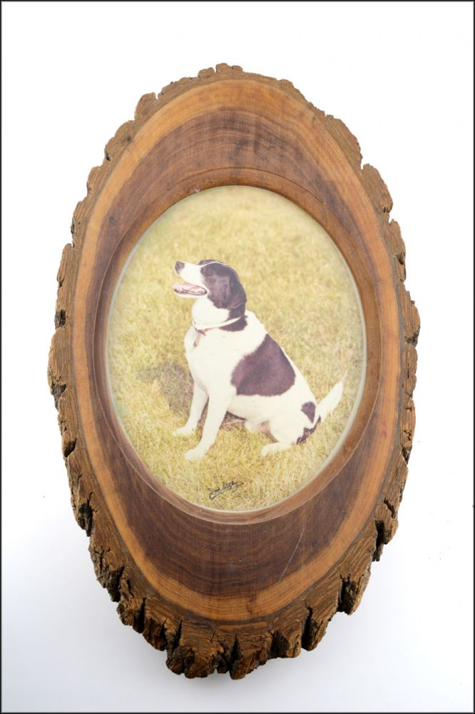 Fine color photo portrait of a dog, displayed in its likely original tree trunk frame. Canine Photography, Jack Schatzberg.