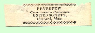 Feverfew. Chrysanthemum Parthenium. United Society, Harvard, Mass. Shaker, Labels