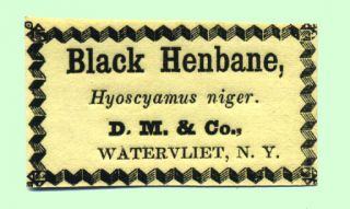 Black Henbane, Hyoscyamus niger. D. M. & Co., Watervliet, N. Y. Shaker, Labels
